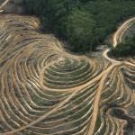 desastre-production-huile-de-palme_galleryphoto_paysage_std