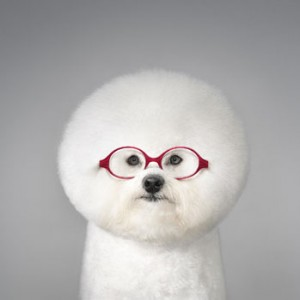 Dog-Portrait-with-Glasses