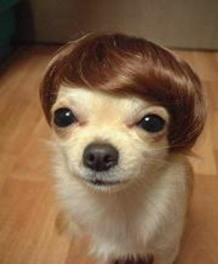 hairy-dog