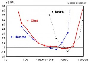 audiogramme-chat-souris-homme