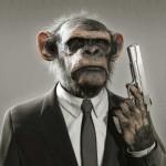 Gorille_rogn_