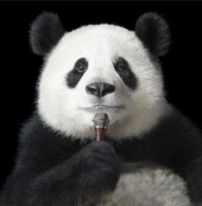 Panda-Portrait-with-Mic