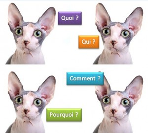 Imitez ce chat qui se pose tant de questions !